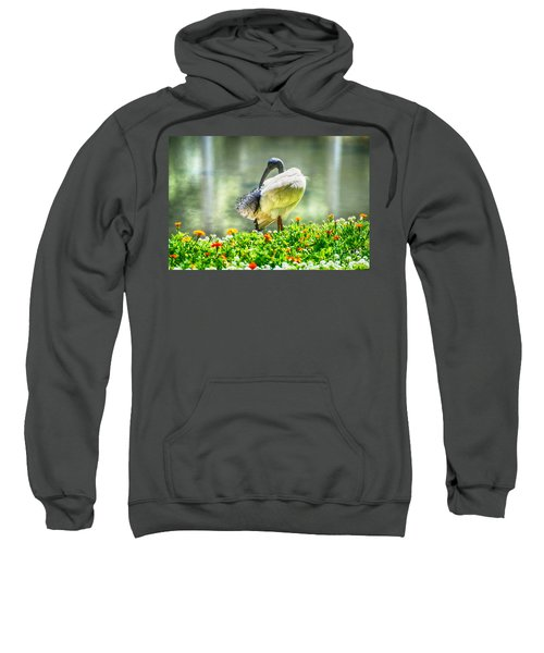Ibis  Sweatshirt