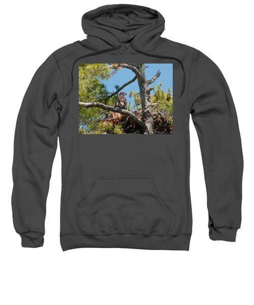 Immature Bald Eagle Sweatshirt