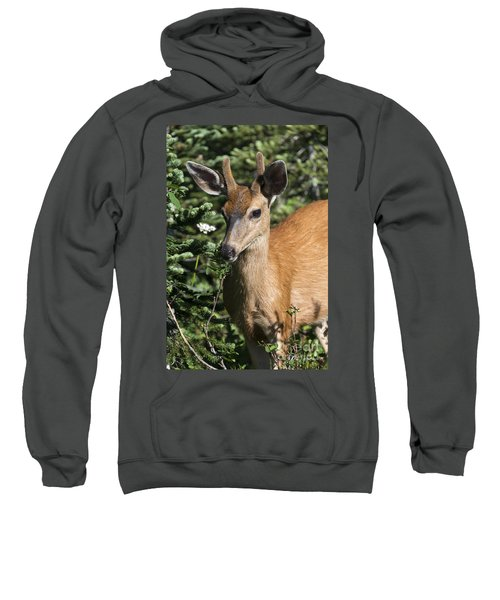 In Velvet Sweatshirt