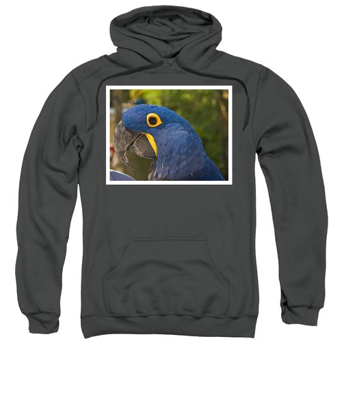 Indigo Macaw Sweatshirt