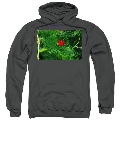 Sweatshirt featuring the photograph Ipomoea Quamoclit by Kim Pate