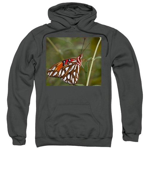 Iridescent Butterfly Sweatshirt