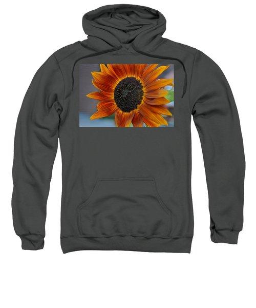 Isabella Sun Sweatshirt