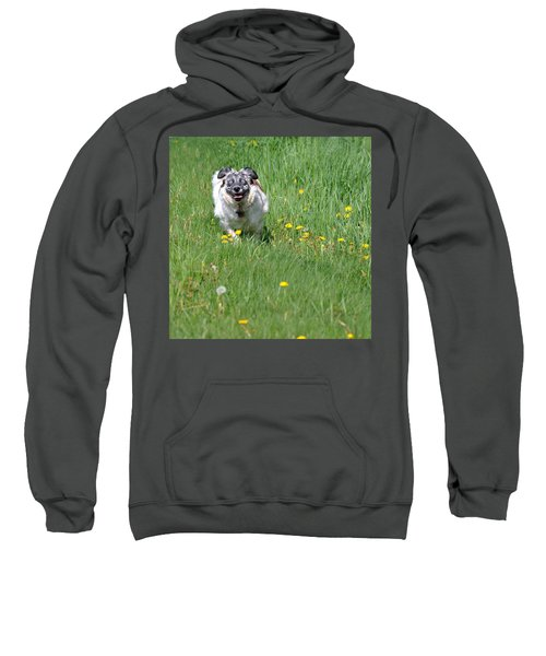 It's Spring - It's Spring Sweatshirt