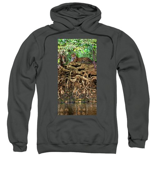 Jaguar Panthera Onca Resting Sweatshirt