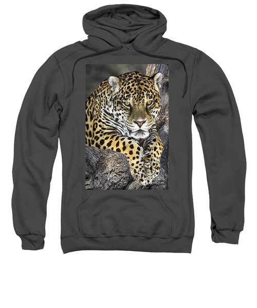 Jaguar Portrait Wildlife Rescue Sweatshirt