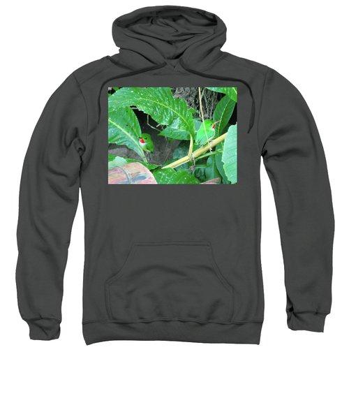 Jamaican Toadies Sweatshirt