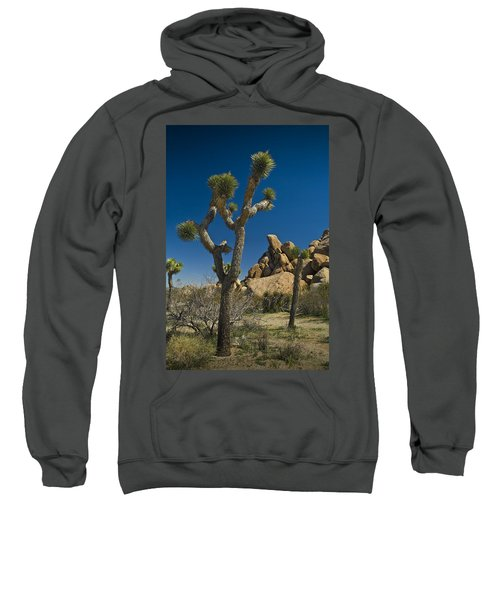 California Joshua Trees In Joshua Tree National Park By The Mojave Desert Sweatshirt