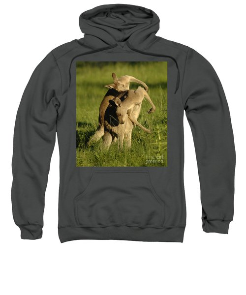 Kangaroos Taking A Bow Sweatshirt by Bob Christopher