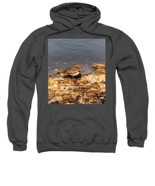 Kildeer On The Rocks Sweatshirt by Robert Frederick