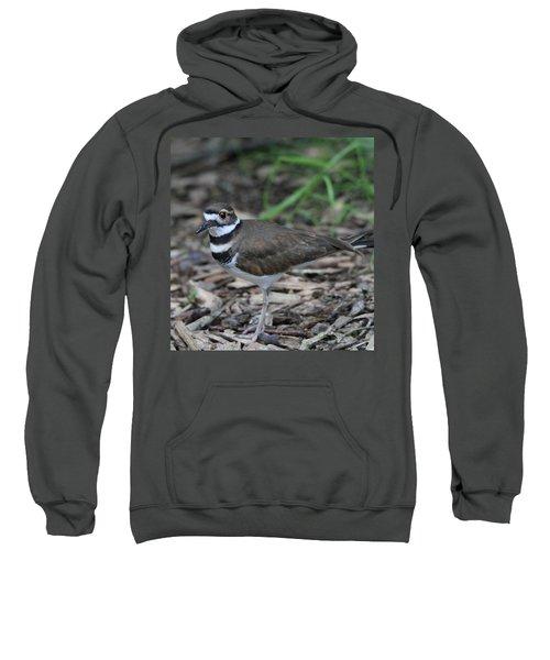Killdeer Sweatshirt by Dan Sproul
