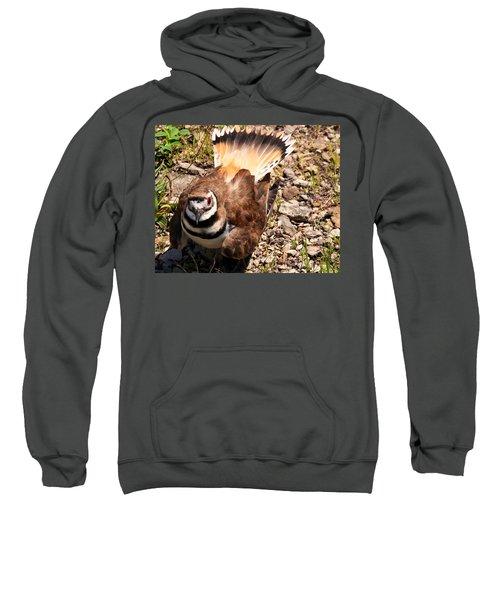 Killdeer On Its Nest Sweatshirt