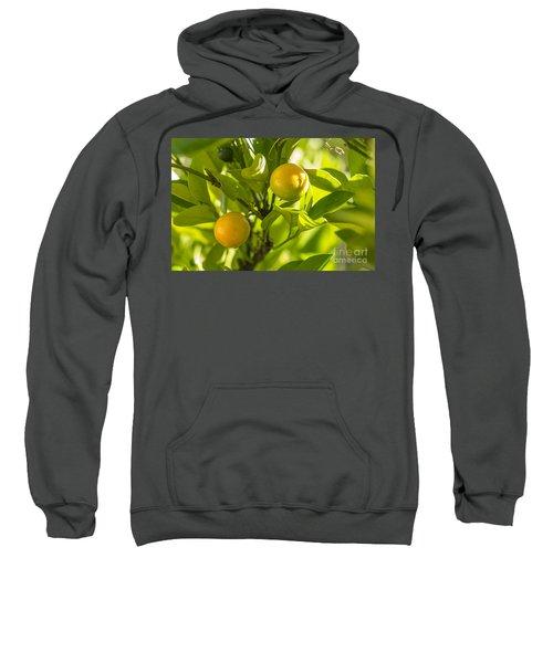 Kumquats Sweatshirt