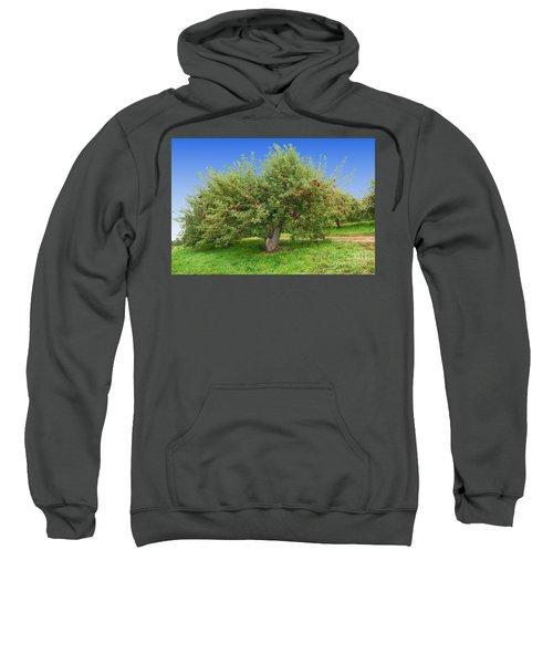 Large Apple Tree Sweatshirt