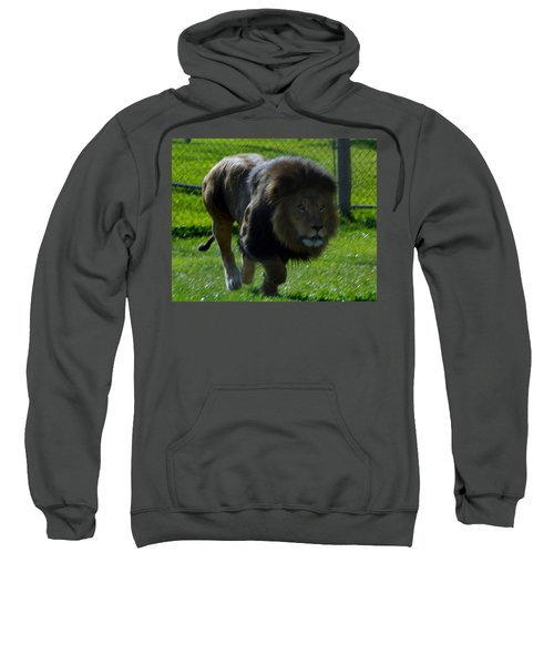 Lion 4 Sweatshirt