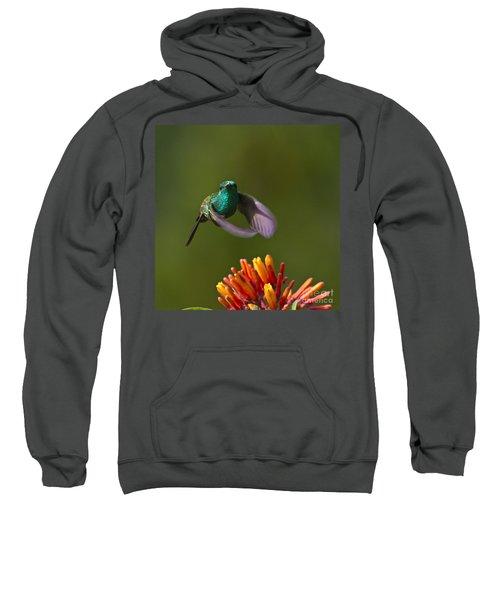 Little Hedgehopper Sweatshirt