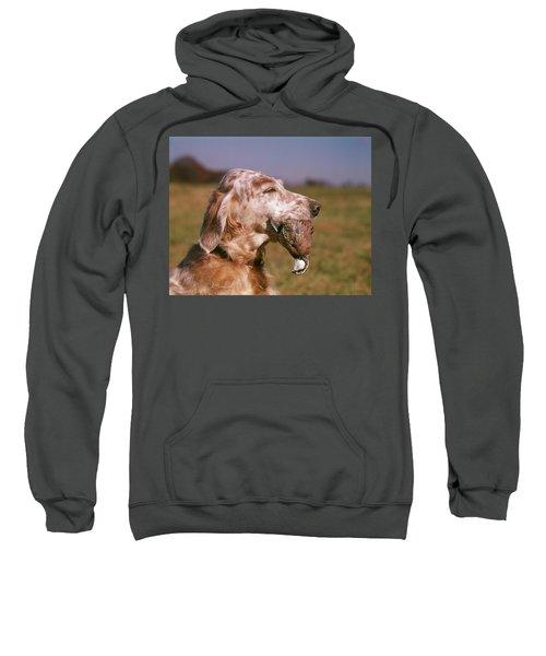 Liver Belton English Setter Dog Head Sweatshirt