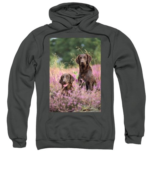 Liver Flat-coated Retriever Dogs Sweatshirt
