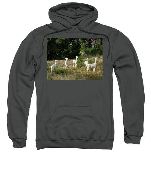 Llamas Standing In A Forest Sweatshirt