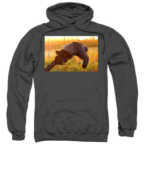 Lost And Found Sweatshirt
