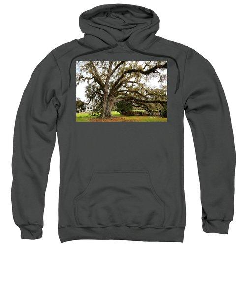 Magnolia Plantation Tree Sweatshirt