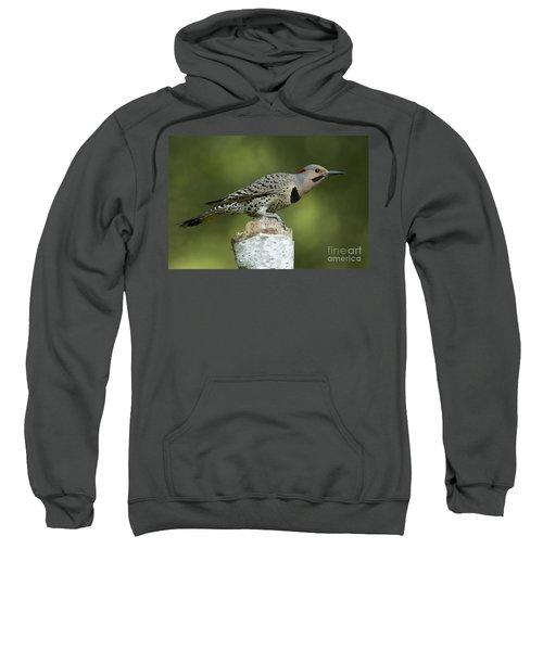 Male Northern Flicker Sweatshirt
