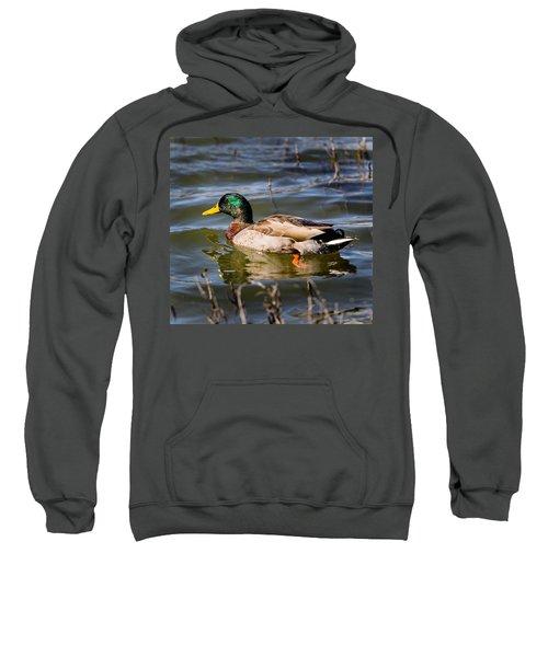 Mallard In Pond Sweatshirt