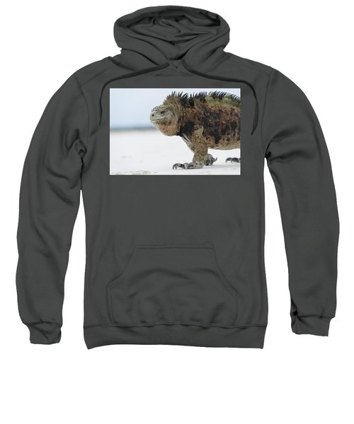 Marine Iguana Male Turtle Bay Santa Sweatshirt