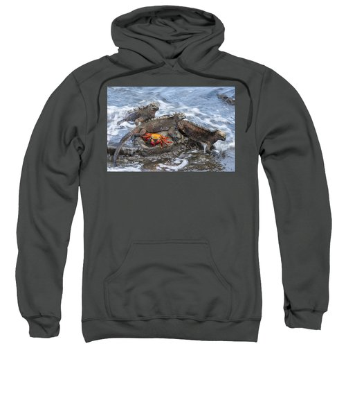 Marine Iguana Trio And Sally Lightfoot Sweatshirt
