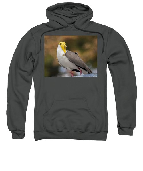 Masked Lapwing Sweatshirt by Carolyn Marshall