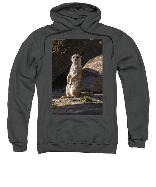 Meerkat Looking Forward Sweatshirt