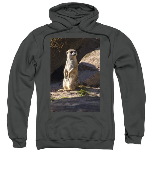 Meerkat Looking Left Sweatshirt by Chris Flees