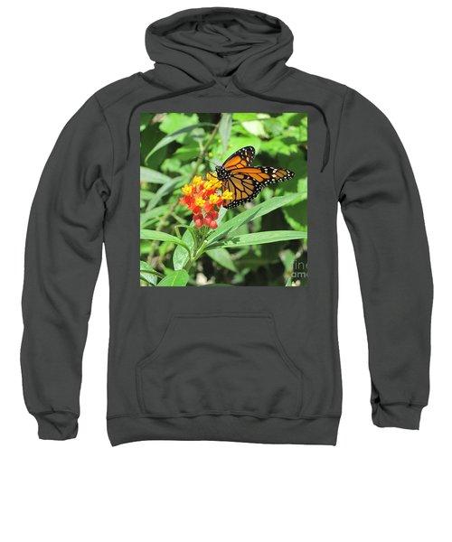 Monarch At Rest Sweatshirt