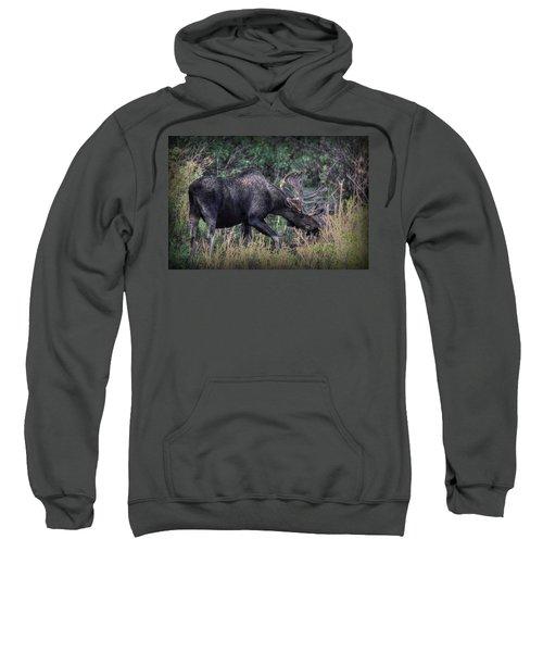 Moose In The Meadow Sweatshirt
