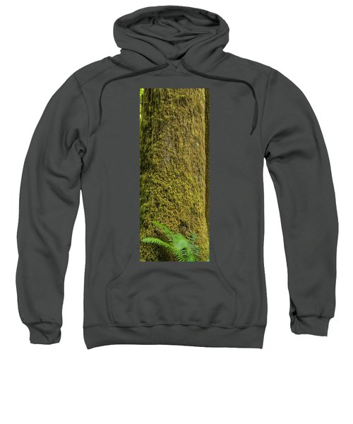 Moss Covered Tree Olympic National Park Sweatshirt by Steve Gadomski