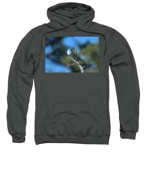 Mountain Bluebird Sweatshirt