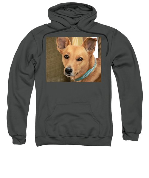 Dog - Cookie One Sweatshirt