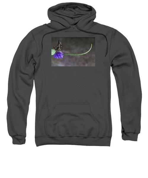 Butterfly - Tailed Jay II Sweatshirt