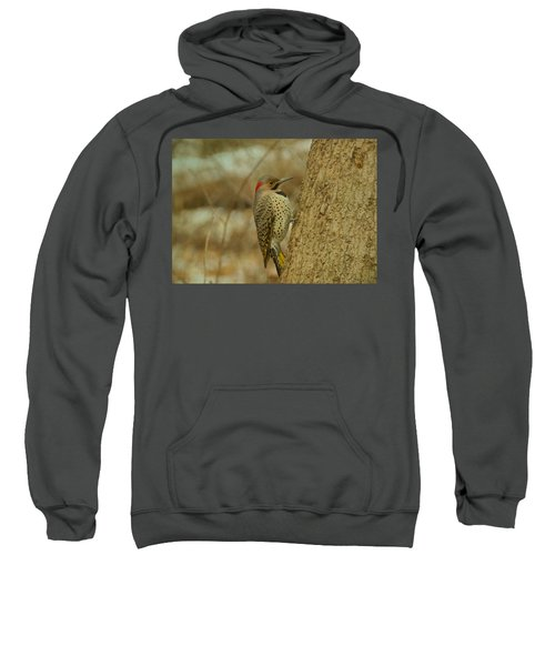 Northern Flicker On Tree Sweatshirt