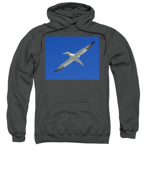 Northern Gannet Sweatshirt by Tony Beck