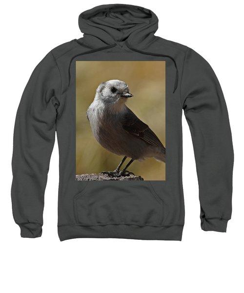 Northern Mockingbird Sweatshirt