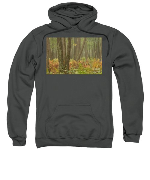 Oak Openings Fog Forest Sweatshirt