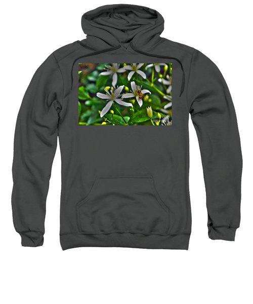Odd Beauty Sweatshirt