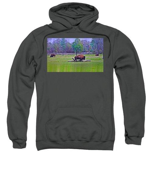 One Bison Family Sweatshirt by Miroslava Jurcik