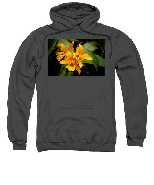 Orange Spotted Lip Cattleya Orchid Sweatshirt