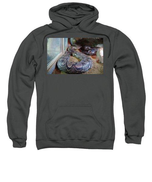 Out Of Africa  Black Snake Sweatshirt