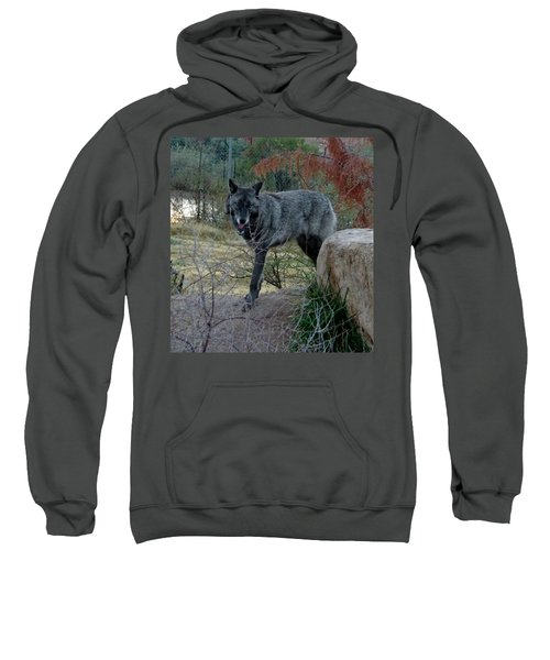 Out Of Africa Black Wolf Sweatshirt