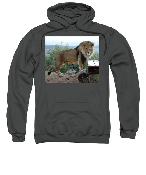 Out Of Africa  Lion 1 Sweatshirt