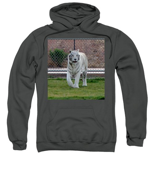 Out Of Africa White Tiger Sweatshirt