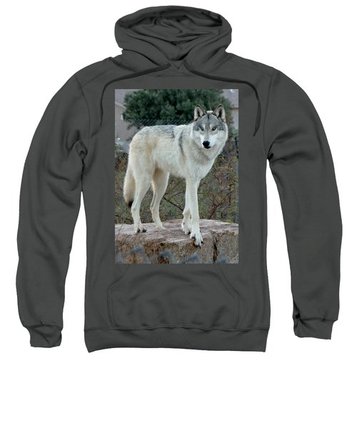 Out Of Africa Wolf  Sweatshirt